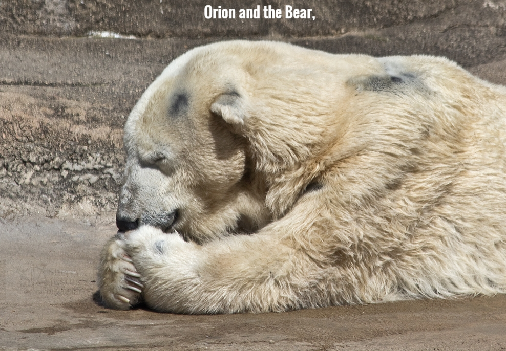 GG_polar bear2_touch.jpg