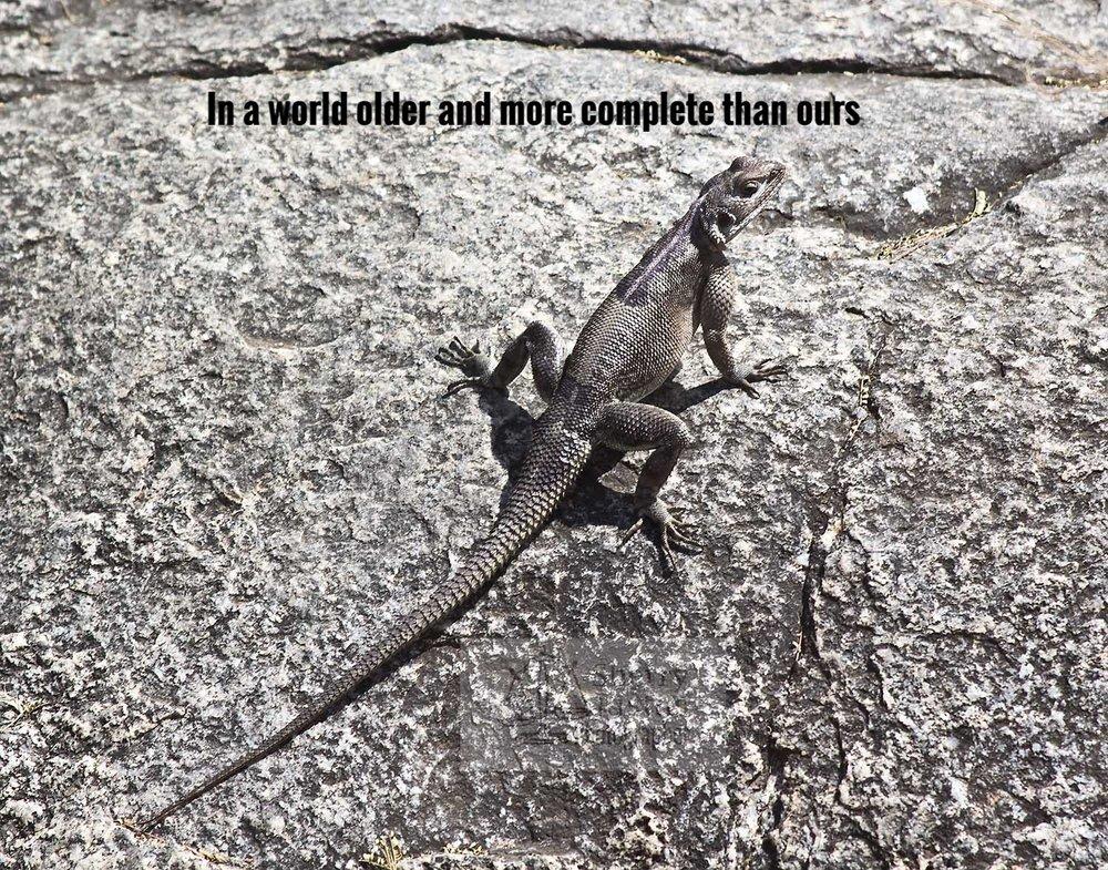 G_lizard2_beston.jpg