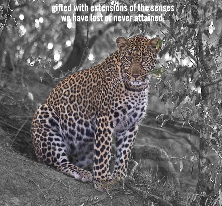 K_leopard2_beston.jpg