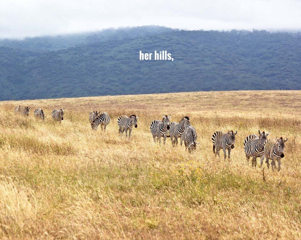 EE_zebras in line2.jpg
