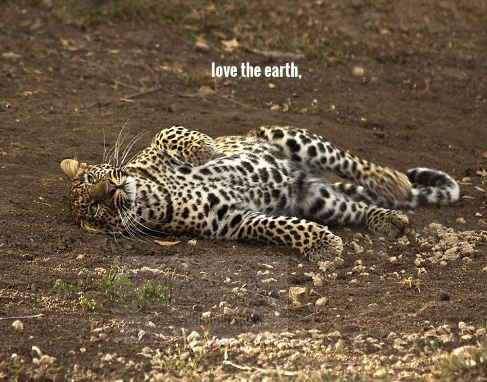 B_leopard rolling2_touch.jpg