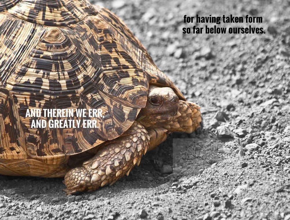 FF_tortoise2_beston.jpg