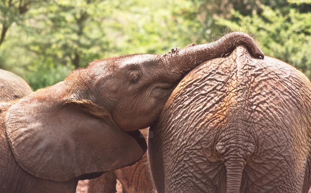 elephant love.jpg