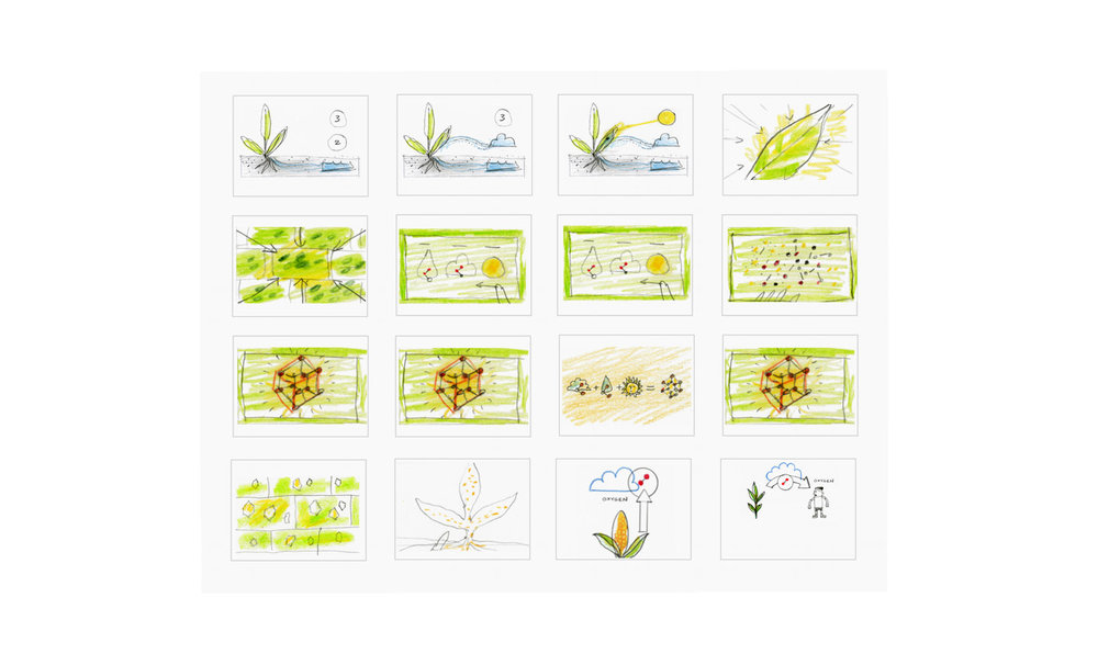 photosynthesis_sketches2.jpg