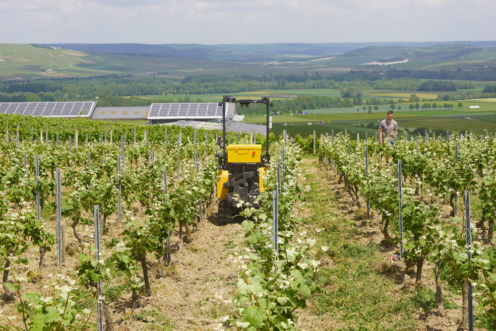 La machine dans les vignes avec une effeuilleuse