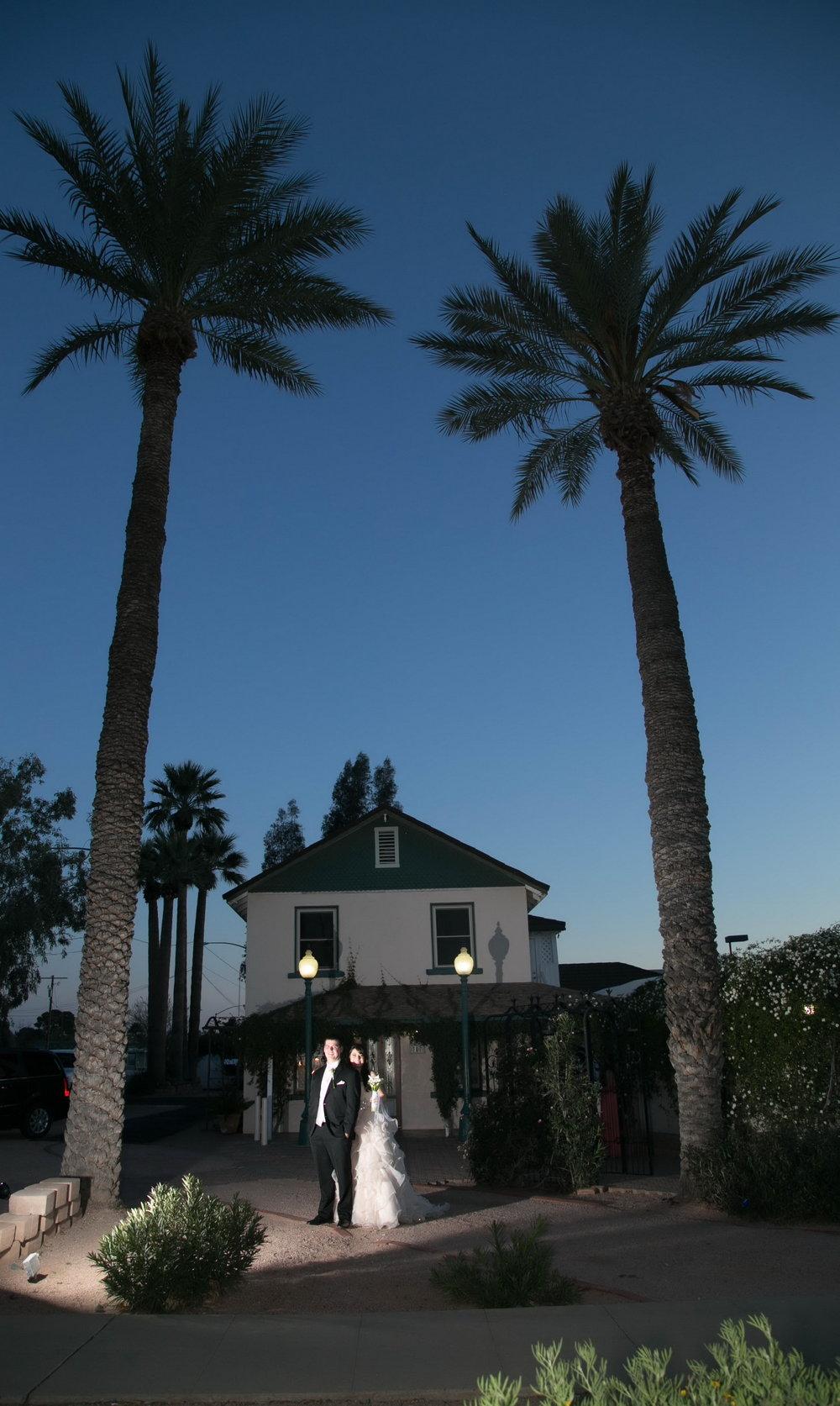 tall palms evening.jpg