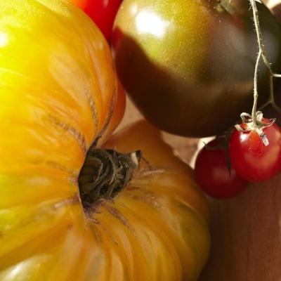 2_39_I_Tomatoes_v2-477.jpg