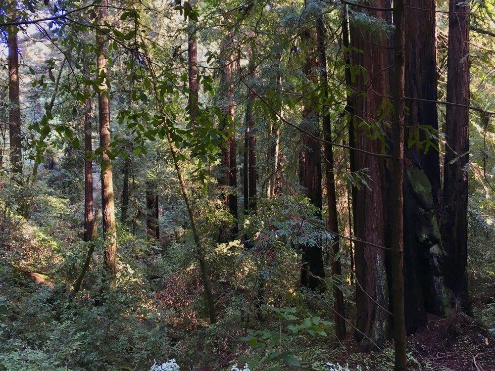 The Santa Cruz Mountains, CA