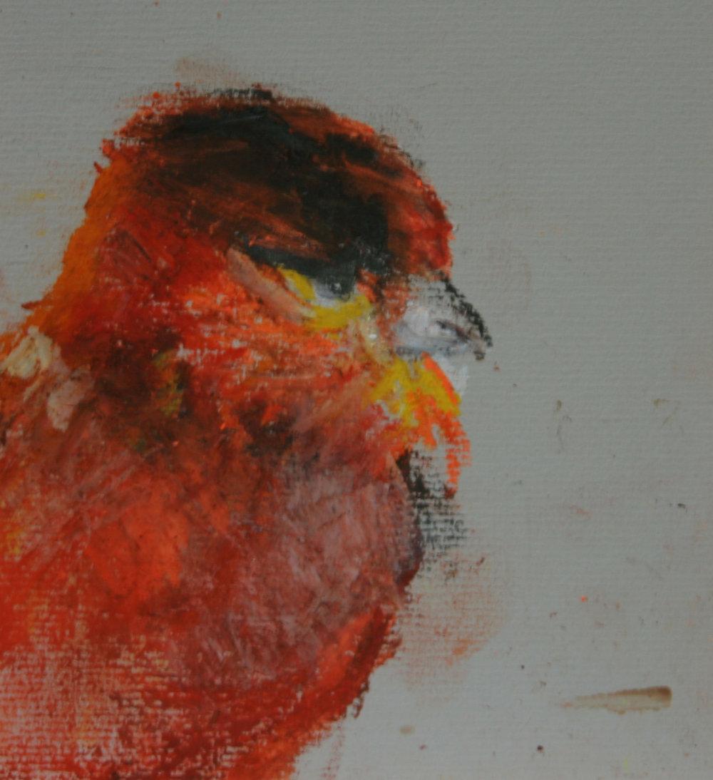 Bird Studies 6