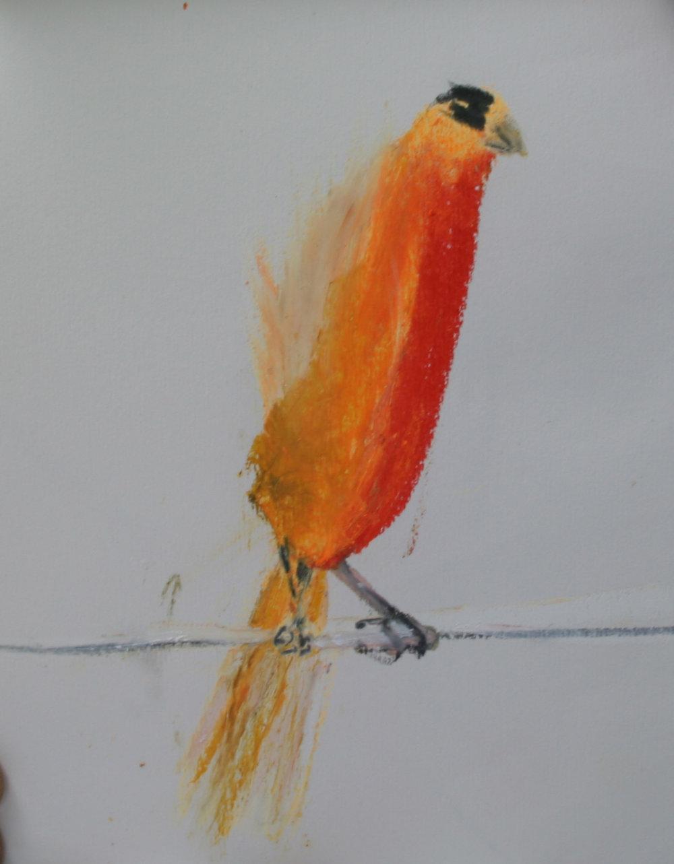 Bird Studies 14