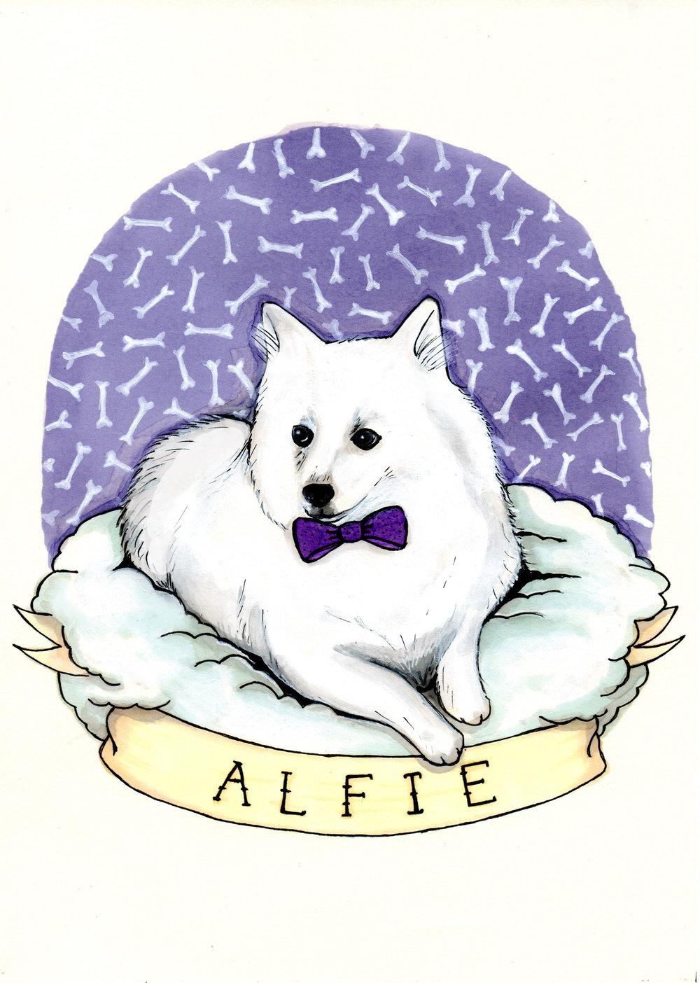 Alfie.jpg