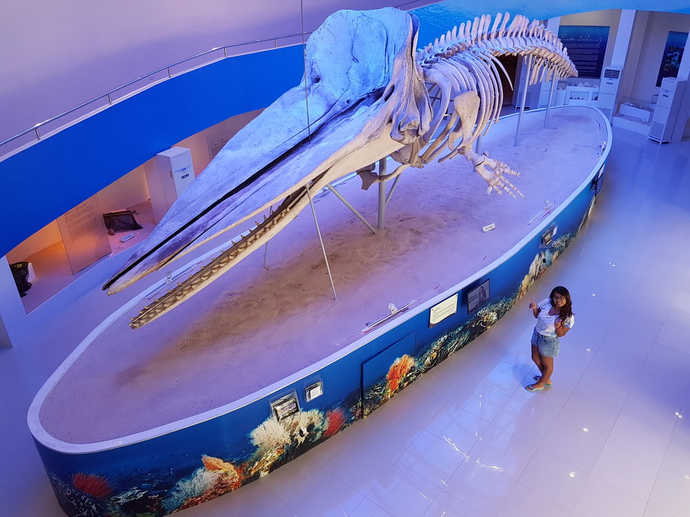 My favorite display inside the museum! DavOr the 53 feet sperm whale found beached along the shores of Gov. Generoso, Davao Oriental.