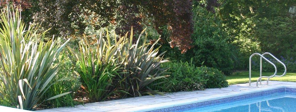 Euphorbia Design