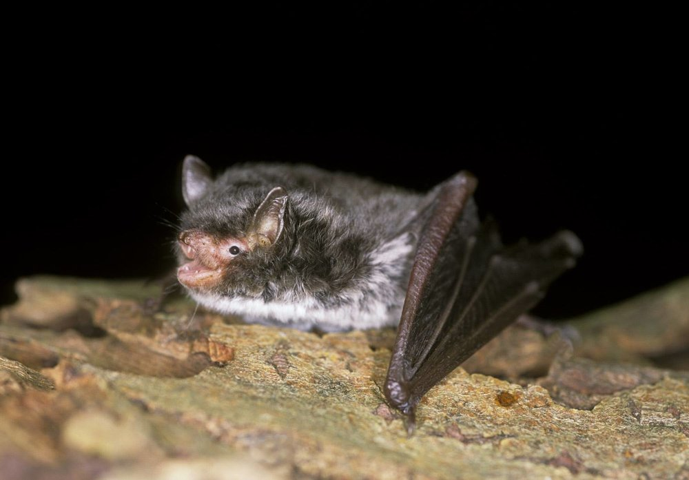 Family Bat Walk