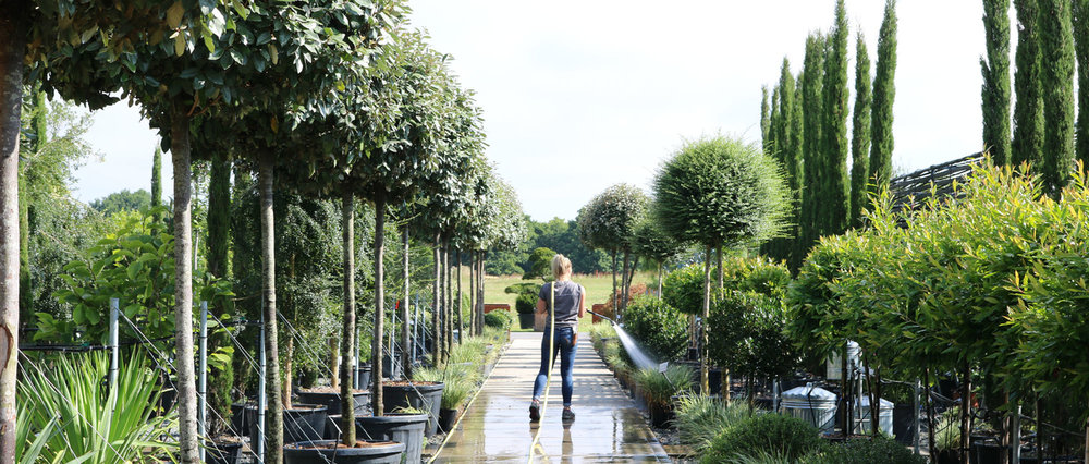 Architectural Plants Nursery Visit