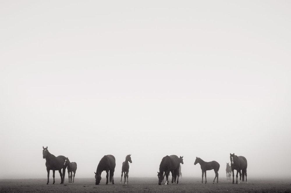 Amanda Lockhard equine photographs
