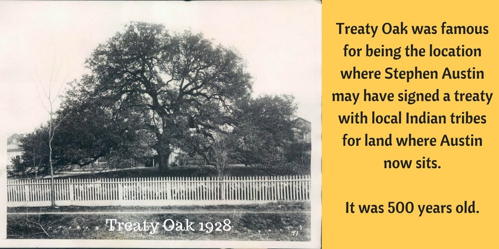 Treaty Oak1.jpg