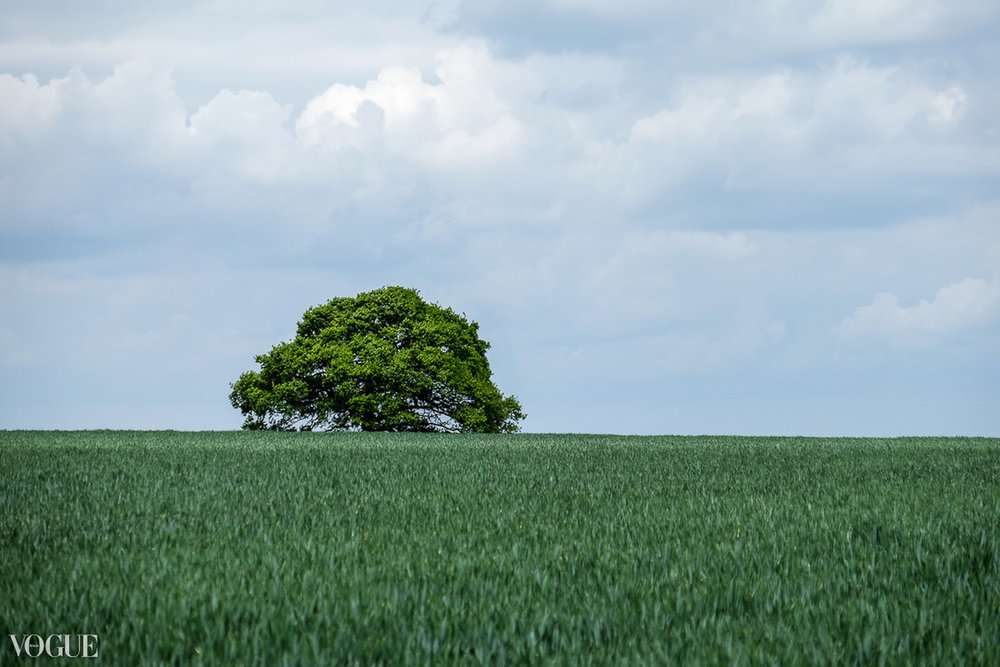 Landscape image of a single tree on the horizon. Image feauted by Vogue Italia