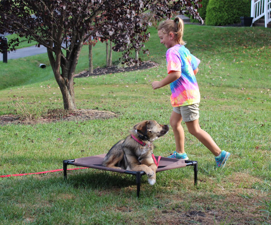 Charlottesville, VA dog training. Private Lessons.