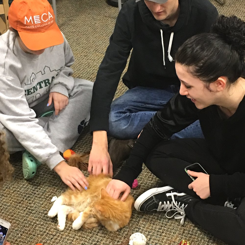 Kittens Stress Relief Week Event