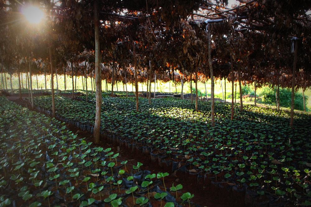 Seedlings production and sale
