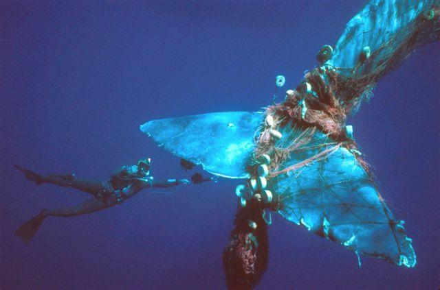 Whale tale wrapped in ocean fishing debris.jpg