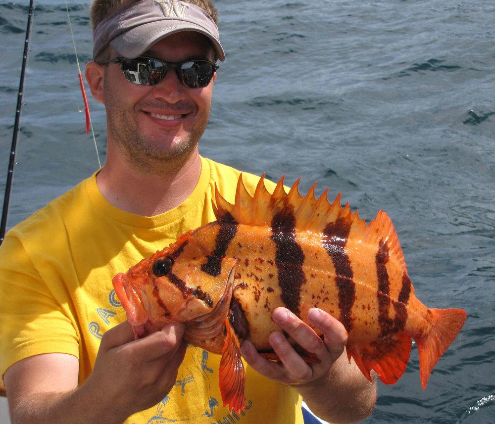 tiger rock fish