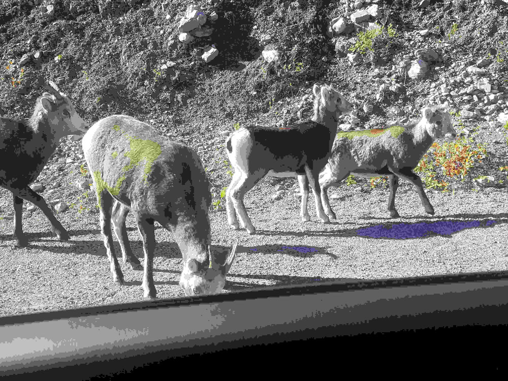 stone sheep out the car window