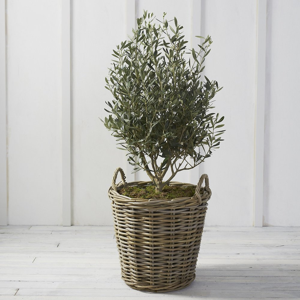 white company planter.jpeg