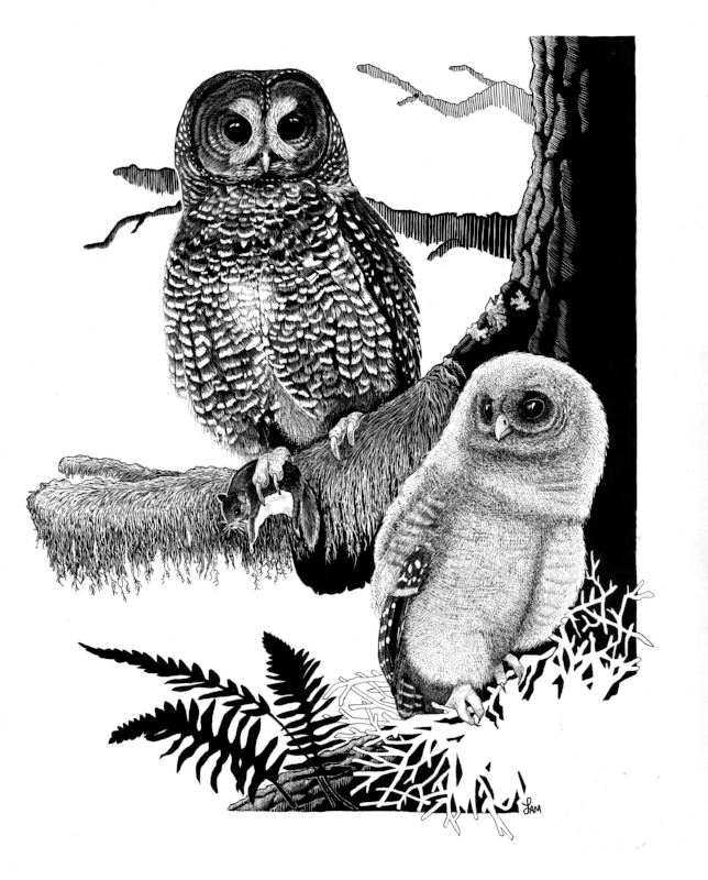 Northern Spotted Owl Mama and Chick