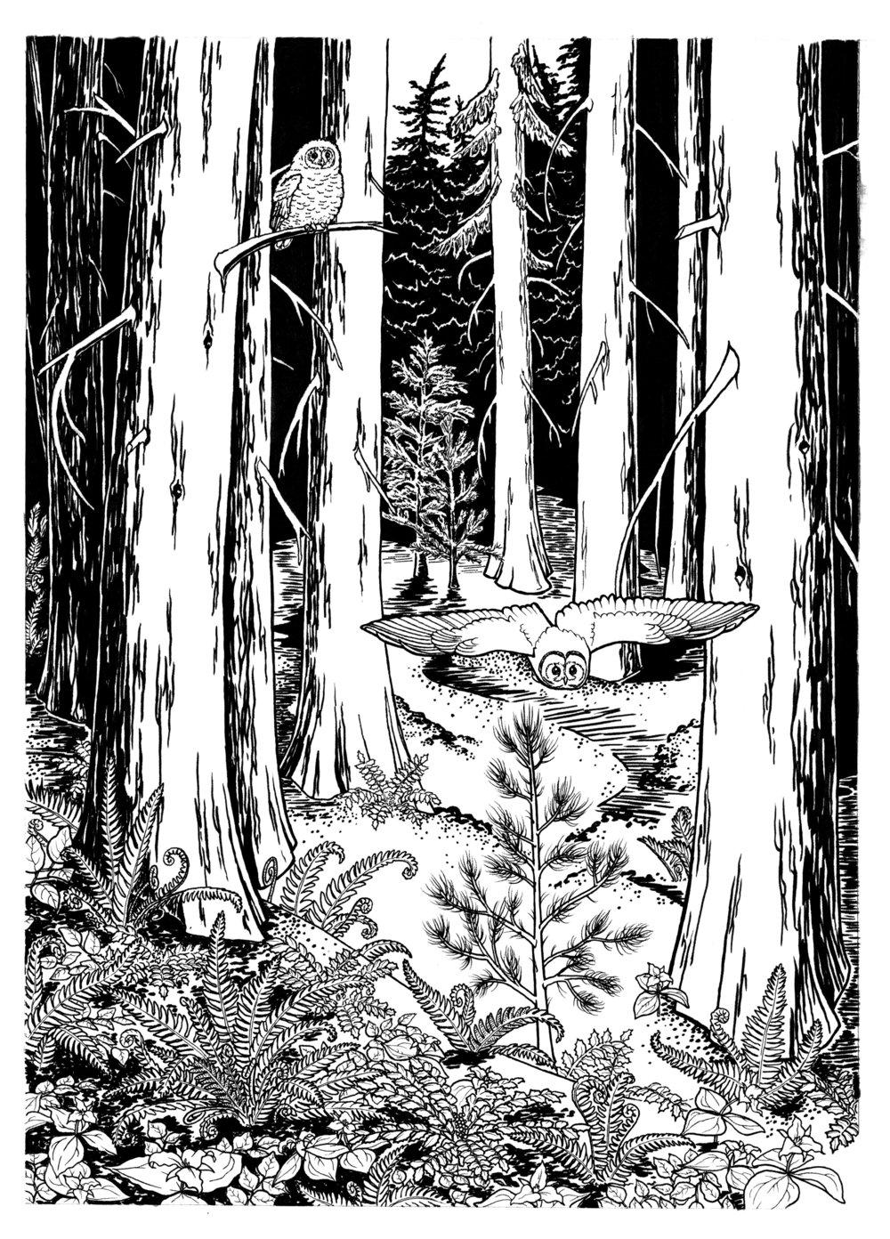 Shadow of the Cedars