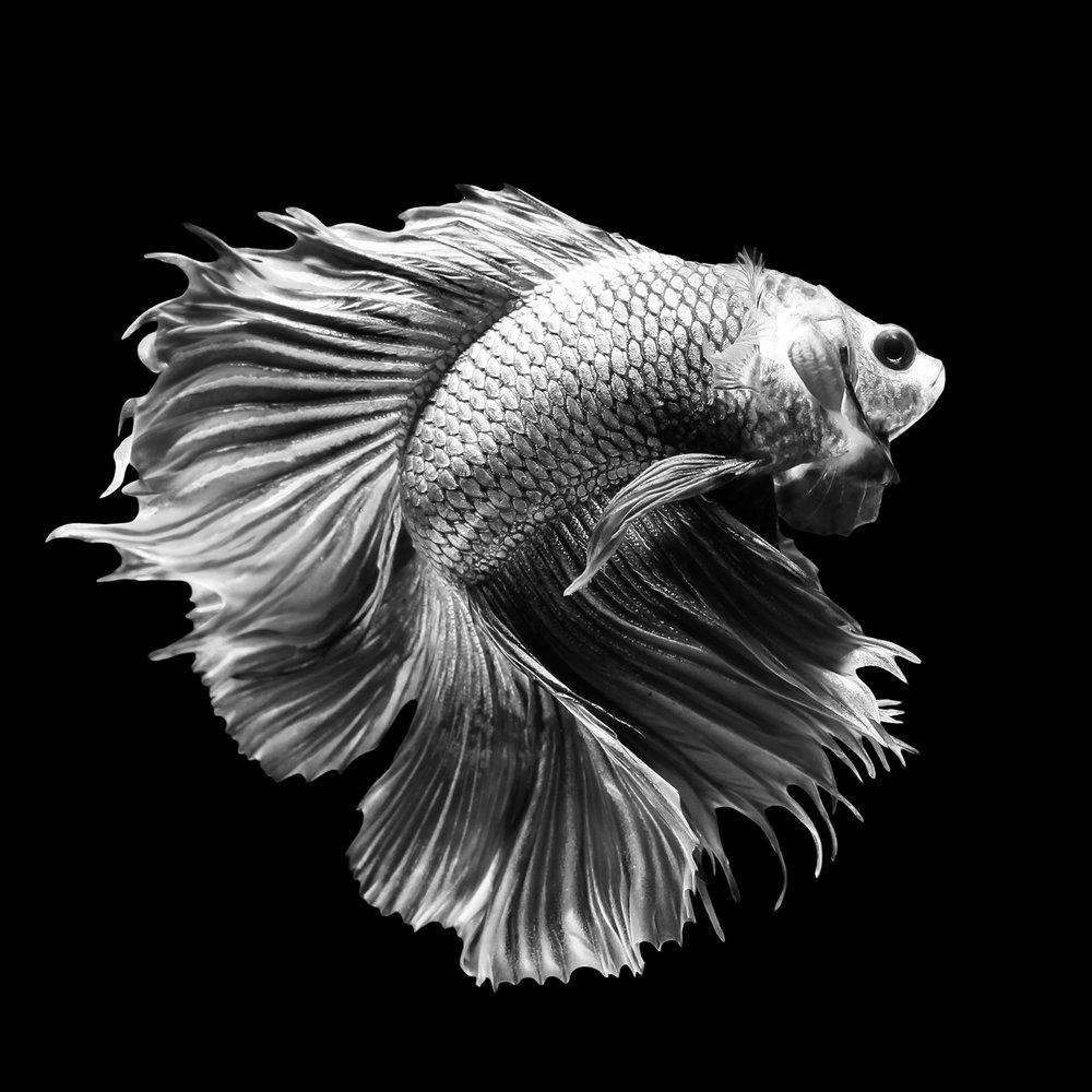 fishnew.jpg