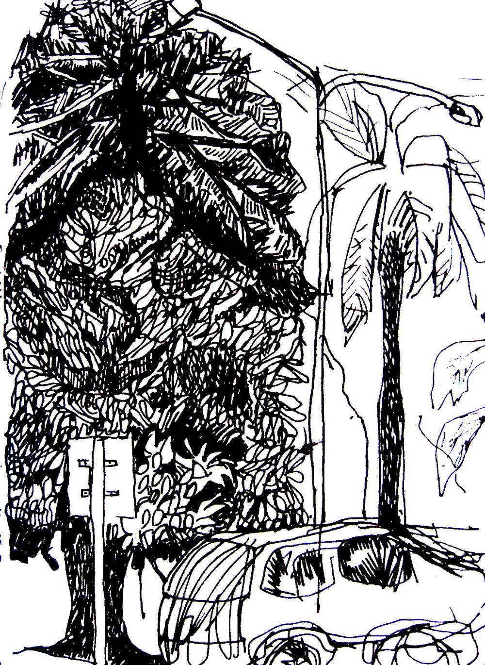 tree_and_car.jpg