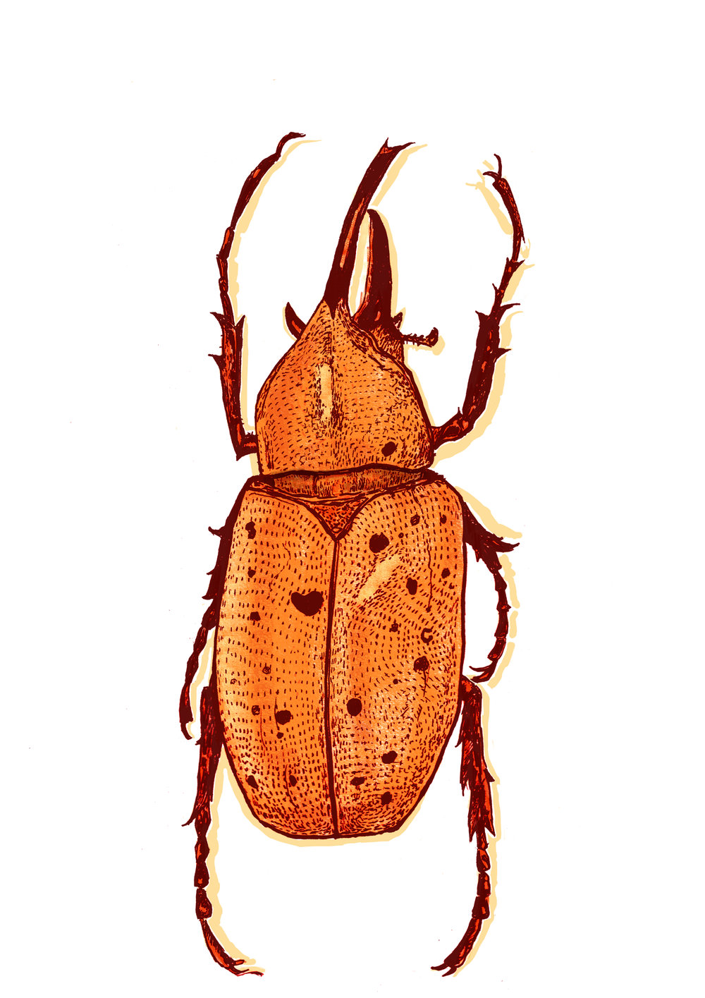 beetle orange.jpg