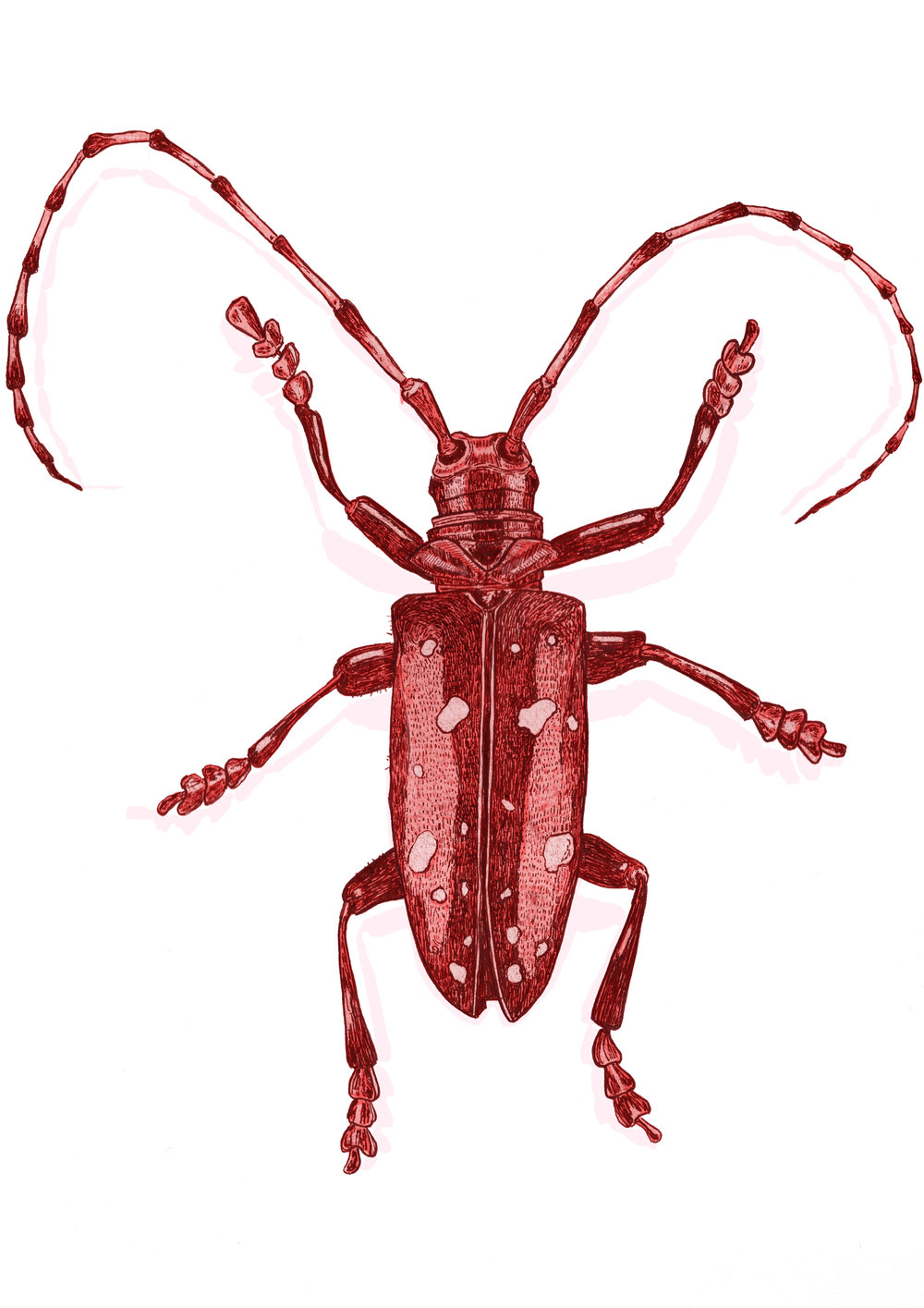 red beetle.jpg