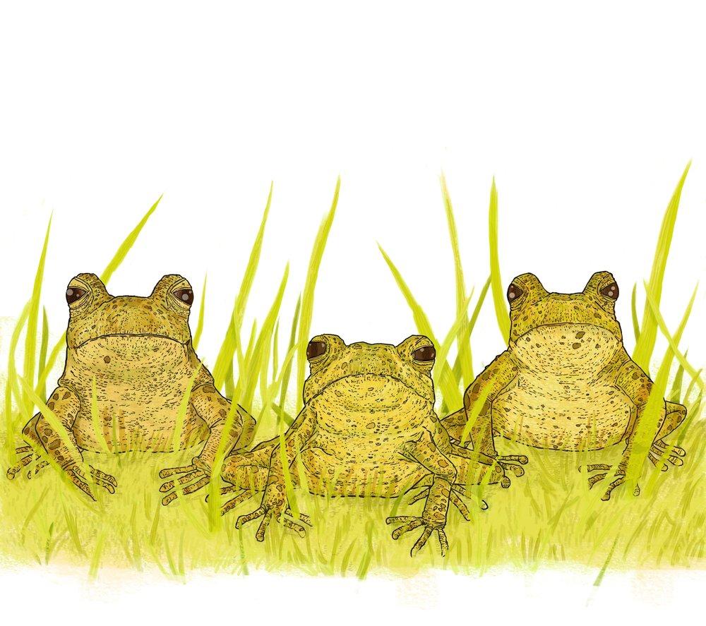 Frogs Boneshaker