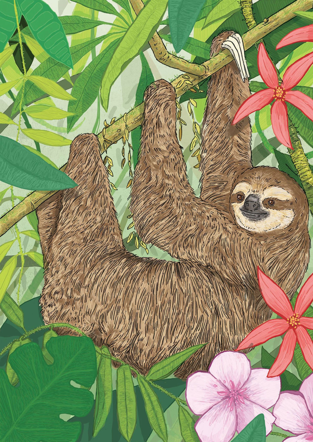 Jungle Sloth