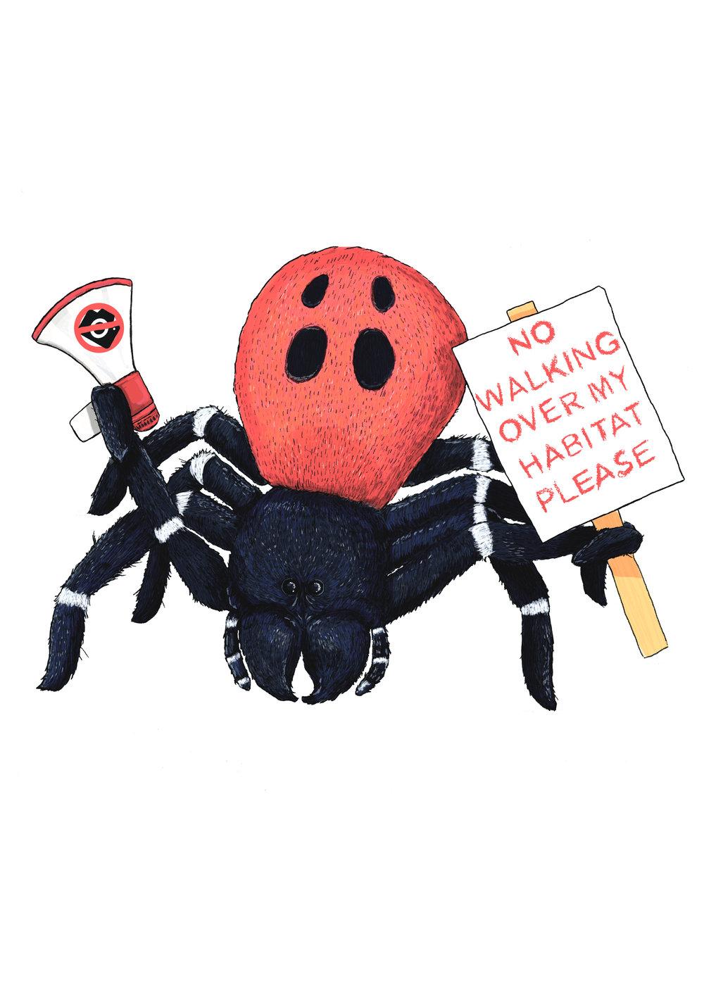 ladybird spiderfinal 3.jpg