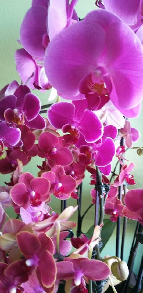 orchidgasm.jpg