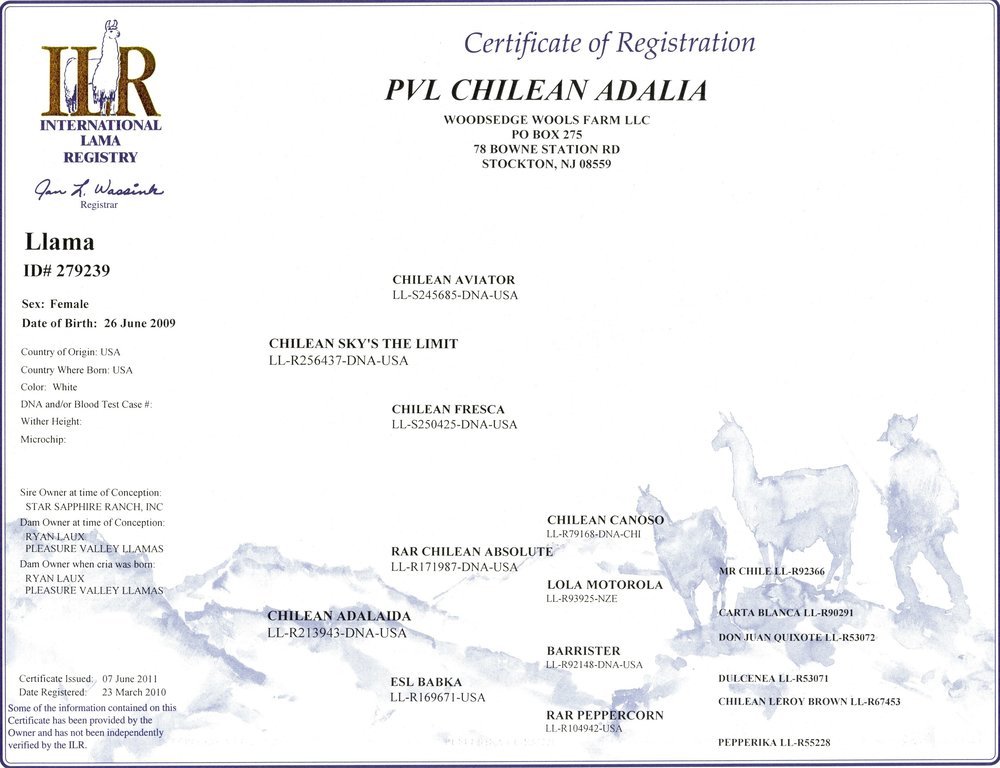 Adalia ILR Certificate-min.jpg