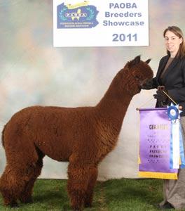 alpacas-soulsistershow2.jpg