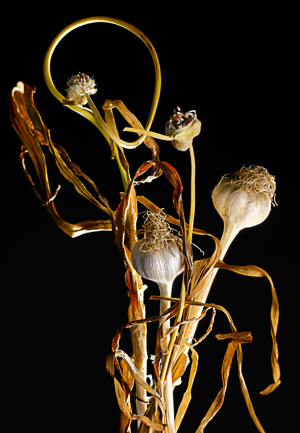 Whole Garlic on Stem