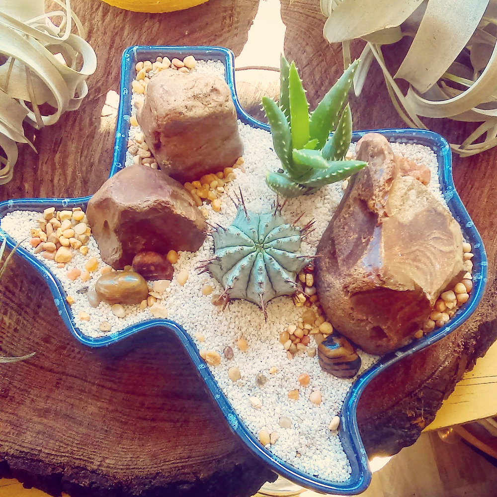 Cactus and Succulent Desert Motif in Texas Shaped Splatterware Planter