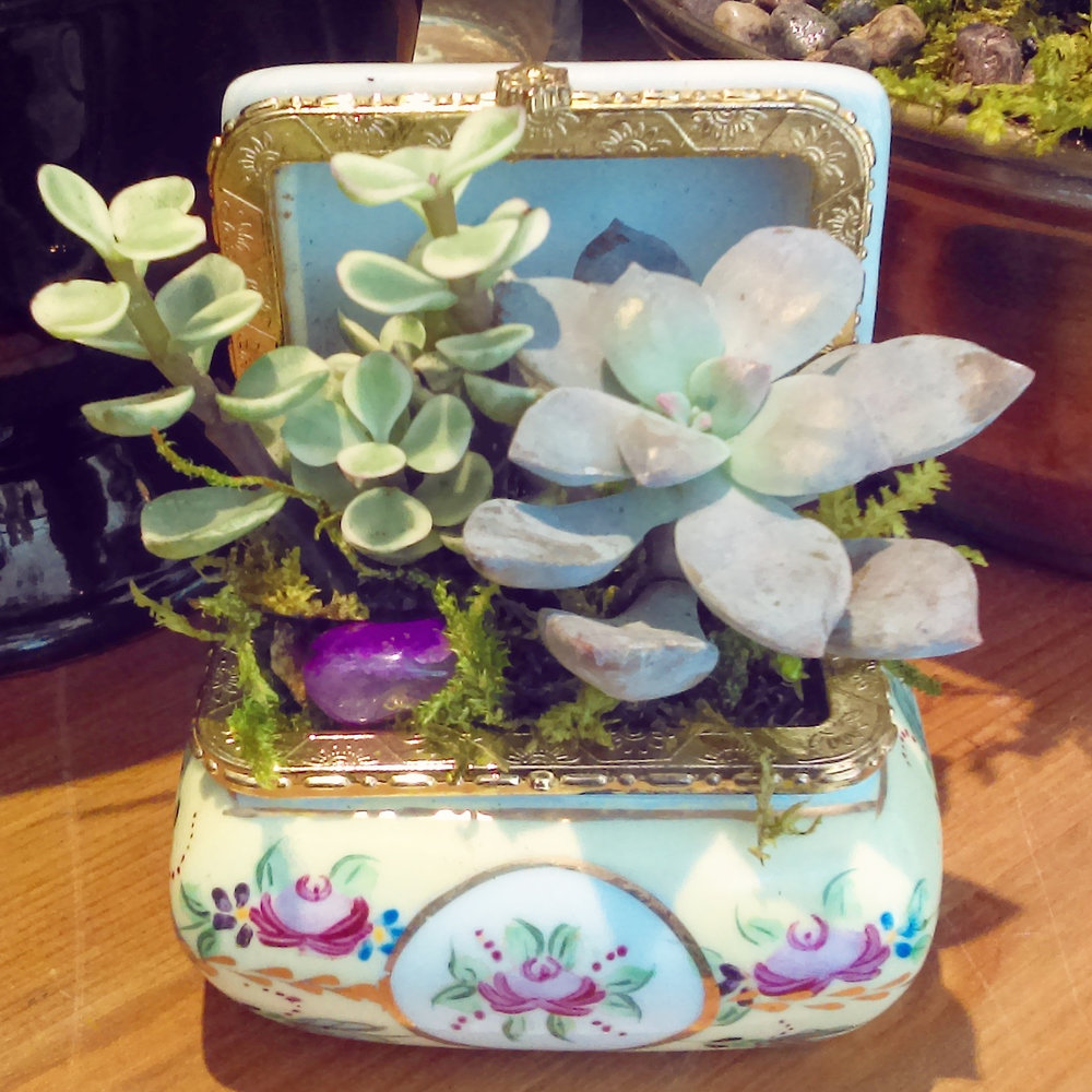 Two Inch Wide Miniature Succulent Planter in Vintage Decorative Pill Case