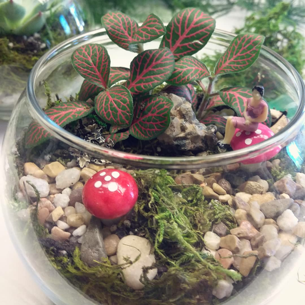 Terrarium TuesdayHappy Hour - Every Tuesday 4pm to 7pm, $20 Terrariums