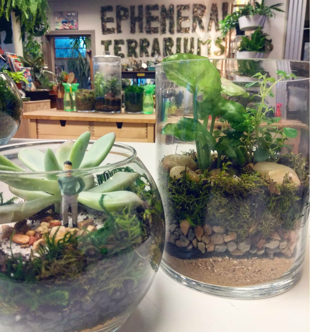 Make Your Own Terrarium and Plant Craft Party Center - Located in Fort Worth, TX's Nearsouthside neighborhood. Spreading plant love through education, Long Term Plant Support, and a healthy dose of creativity since 2014.Make a Terrarium anytime at our brick and mortar location. No green thumb or prior plant experience needed, we do everything together.