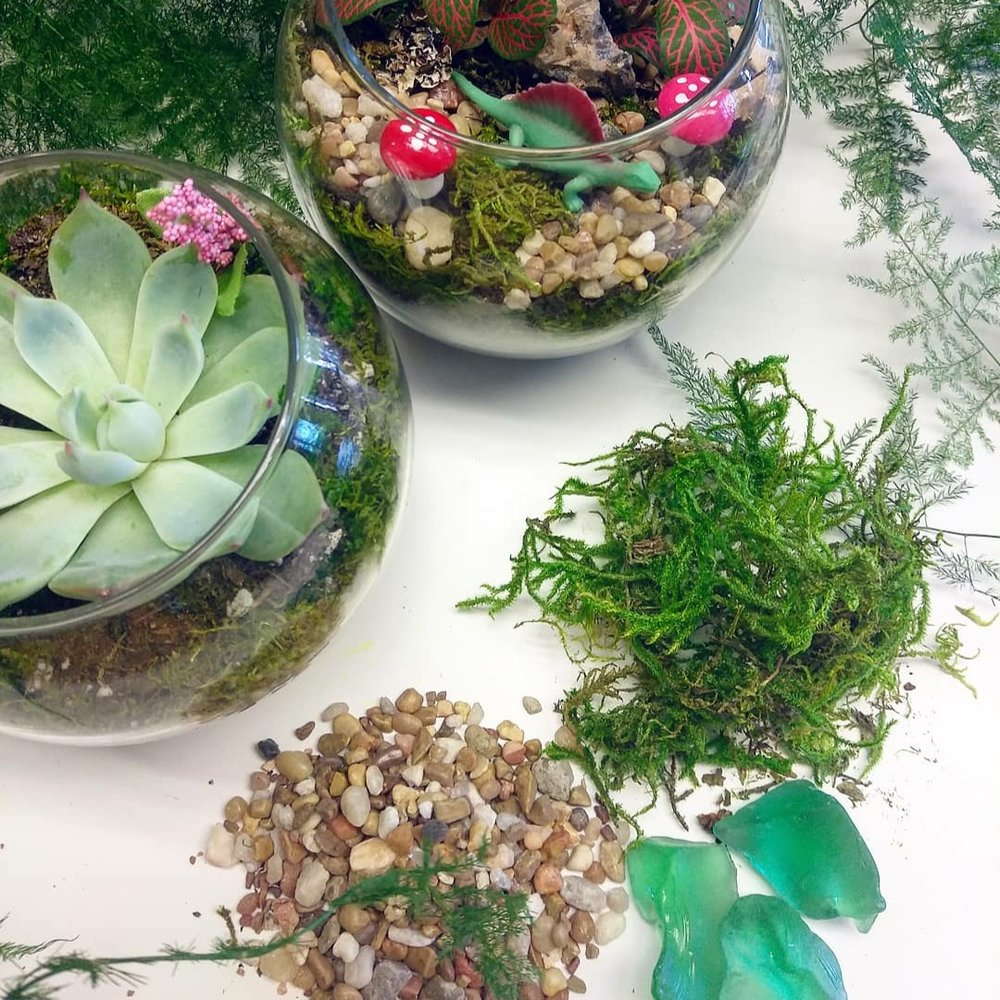 Make Your Own Parties-Info & FAQ's - Make your next Birthday, Team Build, or Ladies Night a Terrarium Party! Or just gather up a group of friends and come make Terrariums with us!