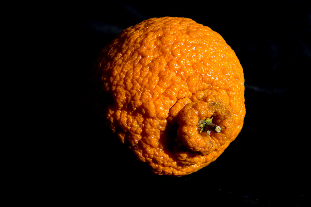 Portrait of Orange