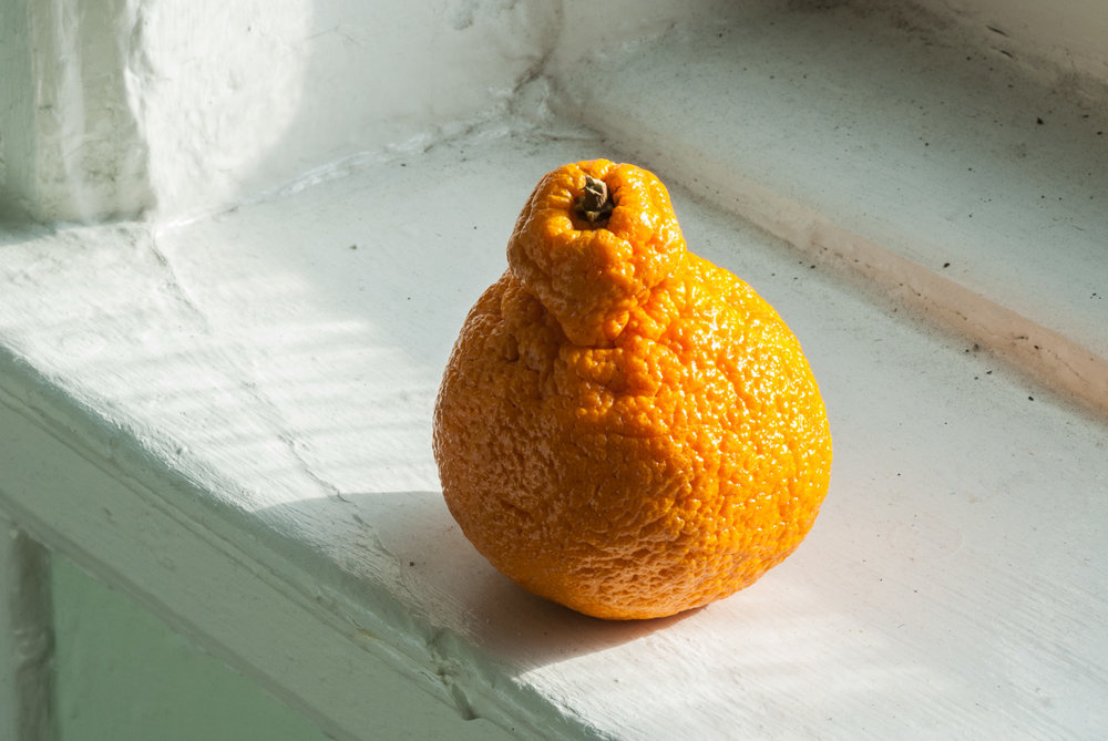 Orange on Ledge