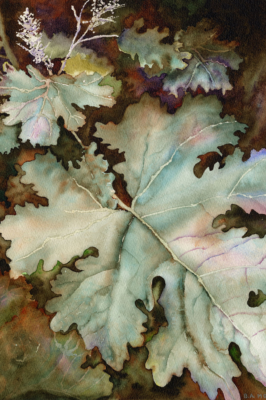 Plume Poppy, watercolor, Barbara Monroe